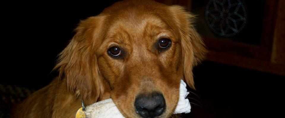 A dog, holding a bone