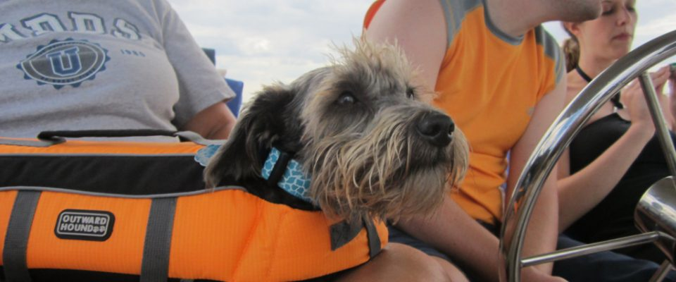 A dog in a life jacket